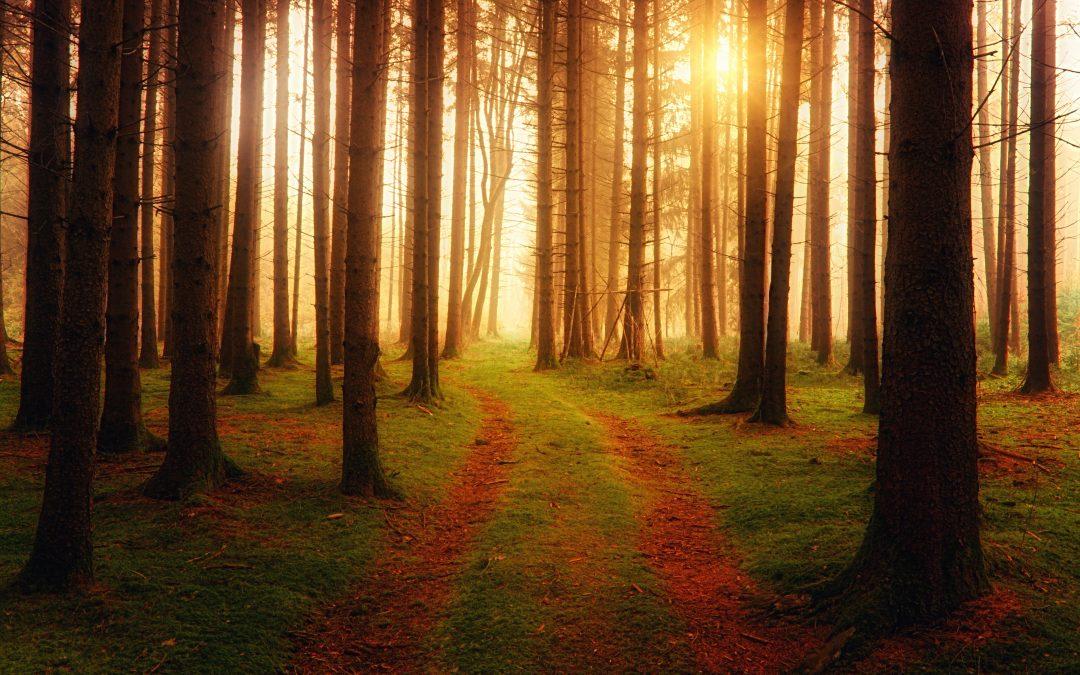 1 Day Self-Inquiry Meditation Retreat – Down The Rabbit Hole